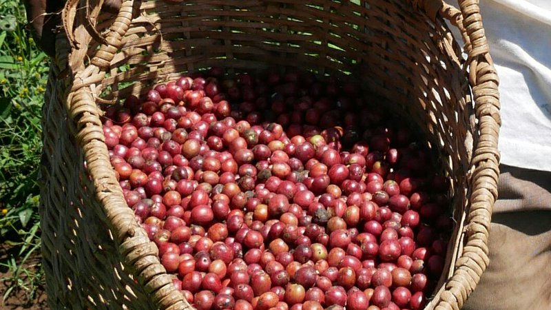 Red-coffee-cherry-basket
